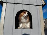 We have dog houses for any size dog, Dog houses ...